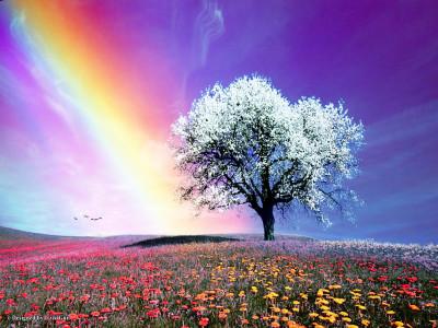 prato fiorito albero cielo arcobaleno