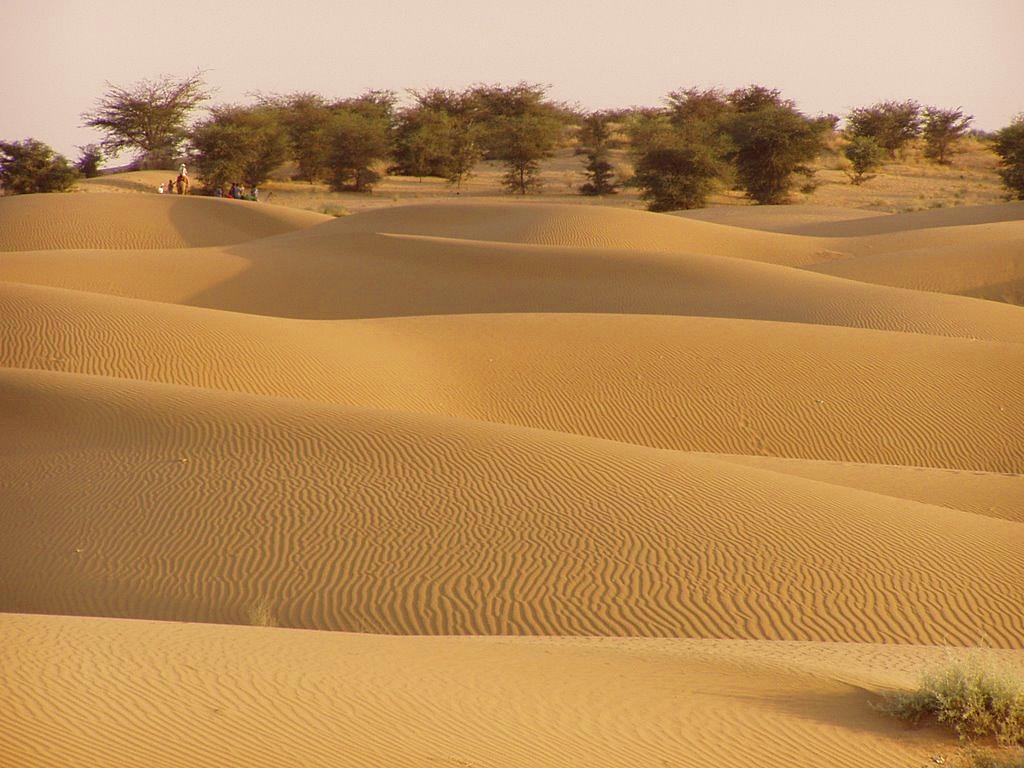 deserto dune oasi